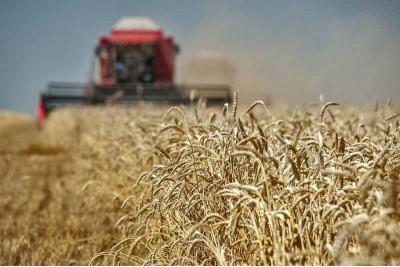 Итоги уборки зерновых 2019 года